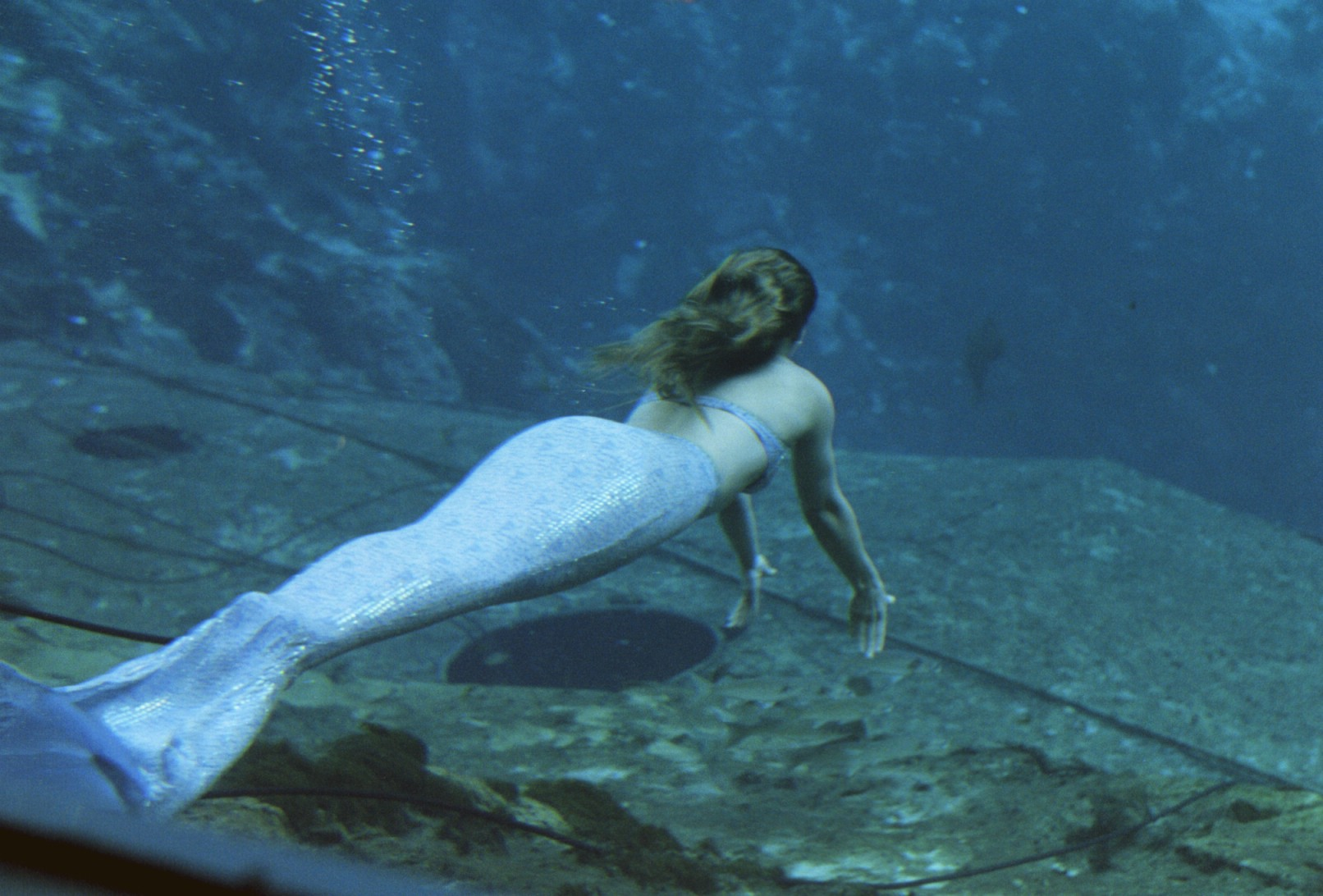 mermaid, ariel mermaid, mermaid pictures,mermaid picture, mermaid images, mermaids, are mermaids real, mermaid caught on tape  -39